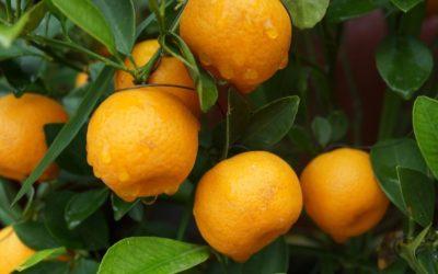 Pourquoi dit-on qu'il faut prendre de la vitamine C en hiver pour éviter les rhumes et les maux saisonniers ?